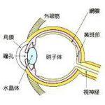 目の黄斑部に存在する色素ルティンを保護するレンズ